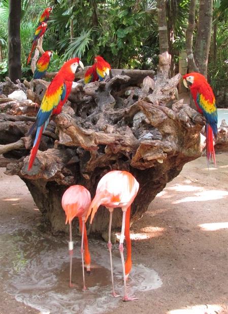 Amigos en el parque Xcaret