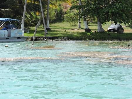 Lagune Bacalar, stromatolithes