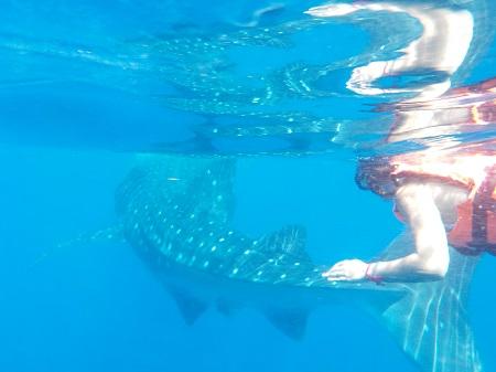 Morganita et le requin-baleine
