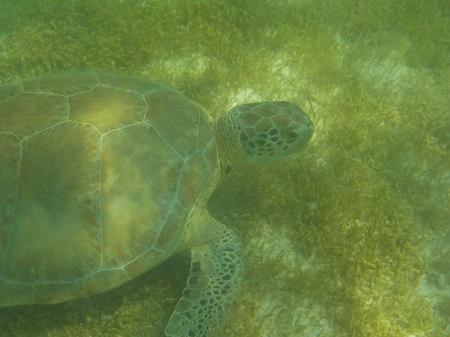 repas tortue plage